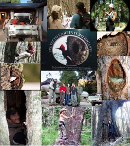 Ecología bosques y fauna foto