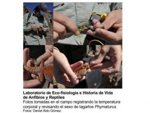 Secuencia Lagartos