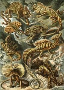 Charlas reptiles