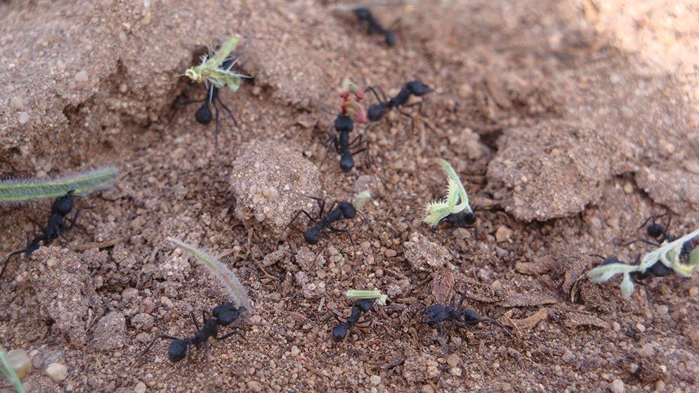 Investigadores-del-Consejo-premiados-por-artículo-sobre-hormigas-cortadoras-de-hojas